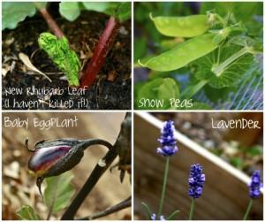 Garden_June5